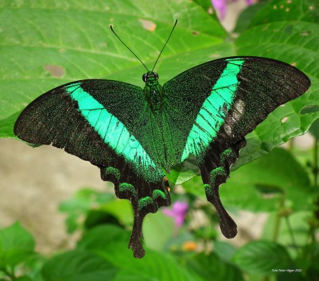 beautiful-butterfly-copy