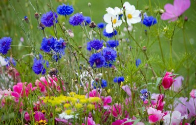 wild-flowers-in-meadow-copy